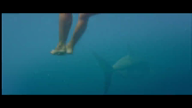 Initial Contact with Shark